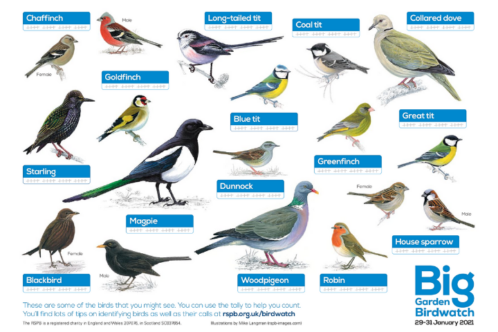 Download a poster of common garden birds!