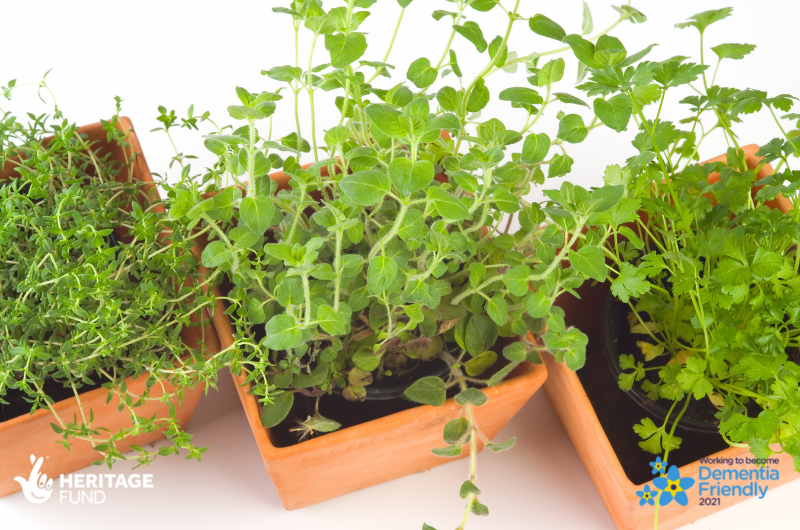 Plant Your Own Herbs! A dementia-friendly activity that's open to all